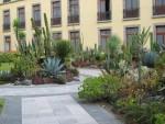 Pretty cactus garden in Vicente's backyard