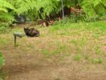 Kittie Kittie Kats in Vicente's back yard.  Where's the damned milk bowl?