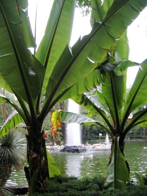 Some really big plants