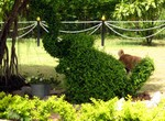 If you look closely, this is an elephant topiary