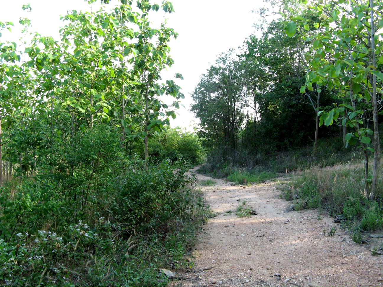 Wonder which path gets us home